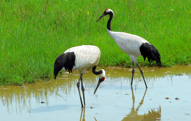 What Are The Different Types Of Cranes : Different types of crane birds images frompo