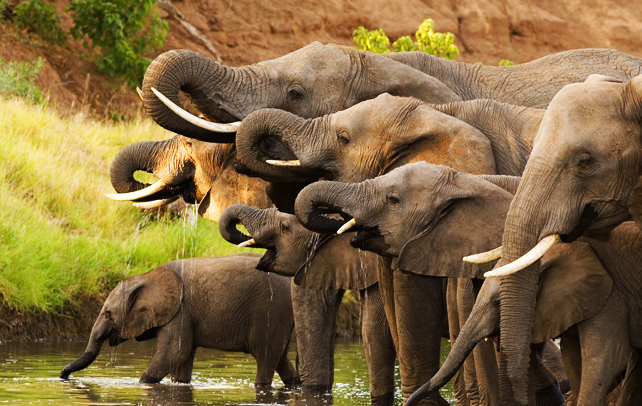 Interesting & Fun Facts About Elephants