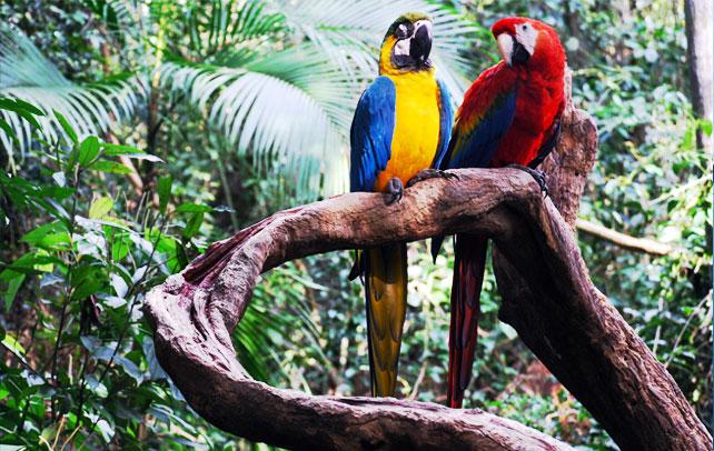 Интересные факты о амазонке