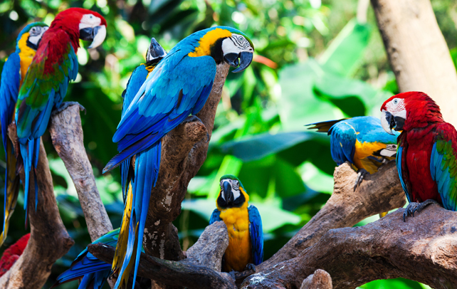 Interesting & Fun Facts About Parrots