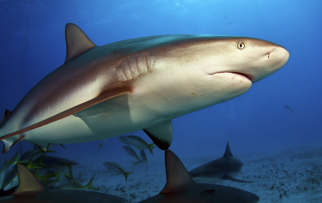 Interesting & Fun Facts About Sharks
