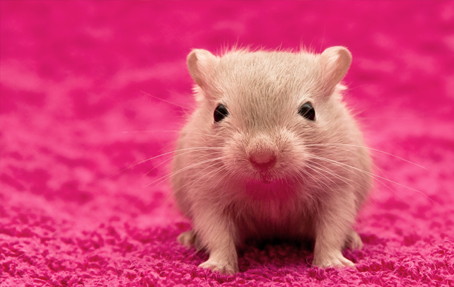 Interesting And Fun Facts About Gerbil