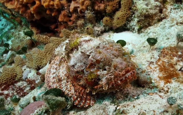 Kết quả hình ảnh cho stonefish
