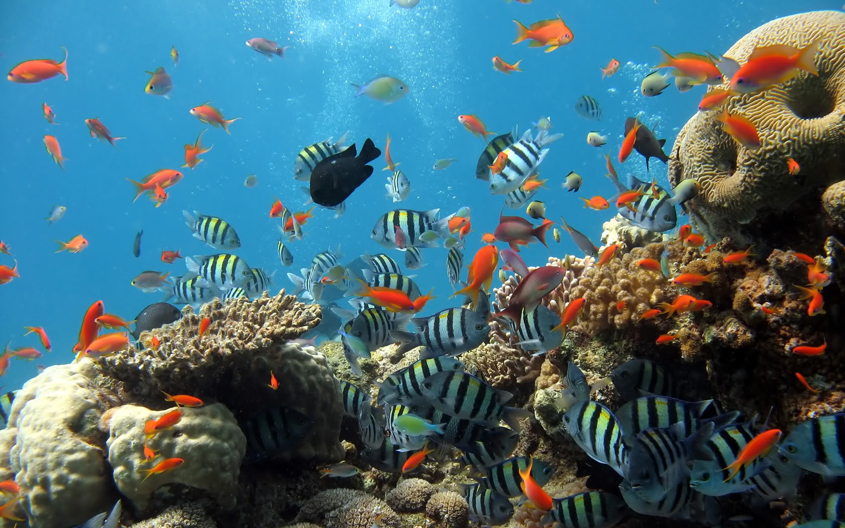 A Spectacular Coral Reef