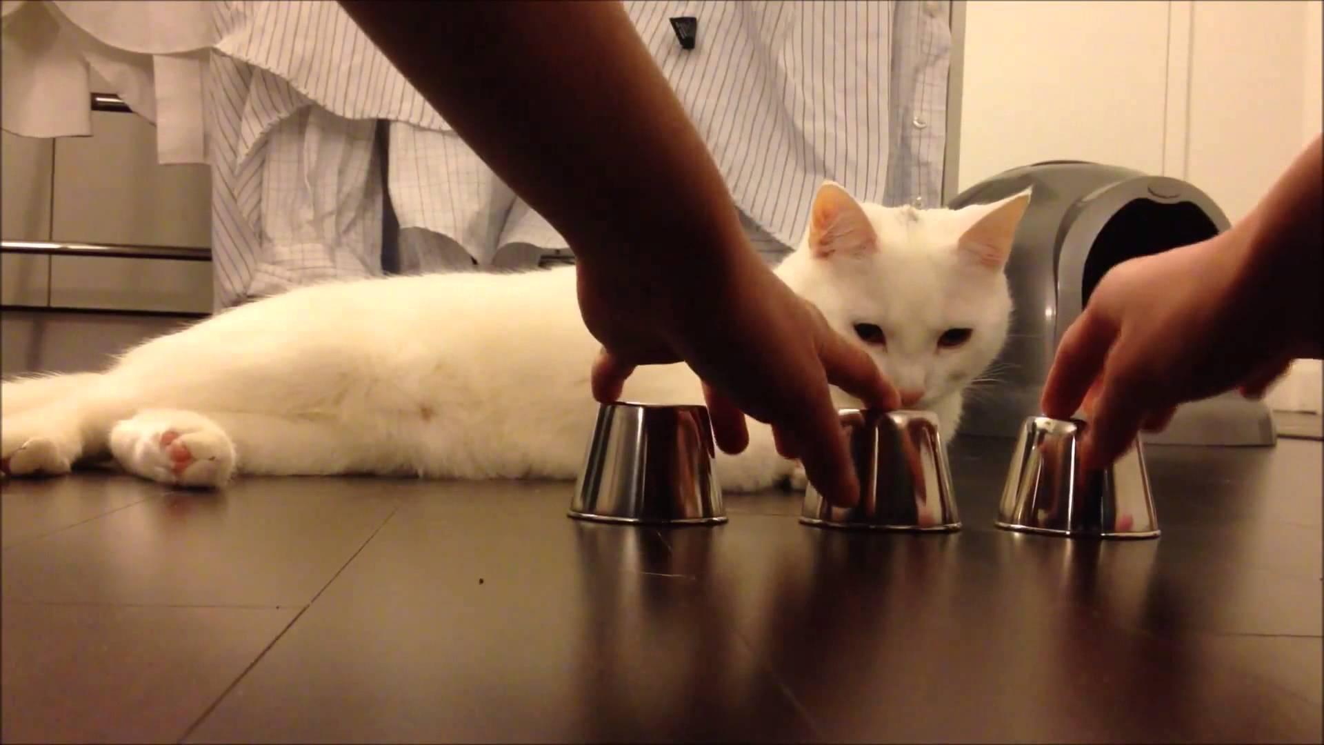 cat wins