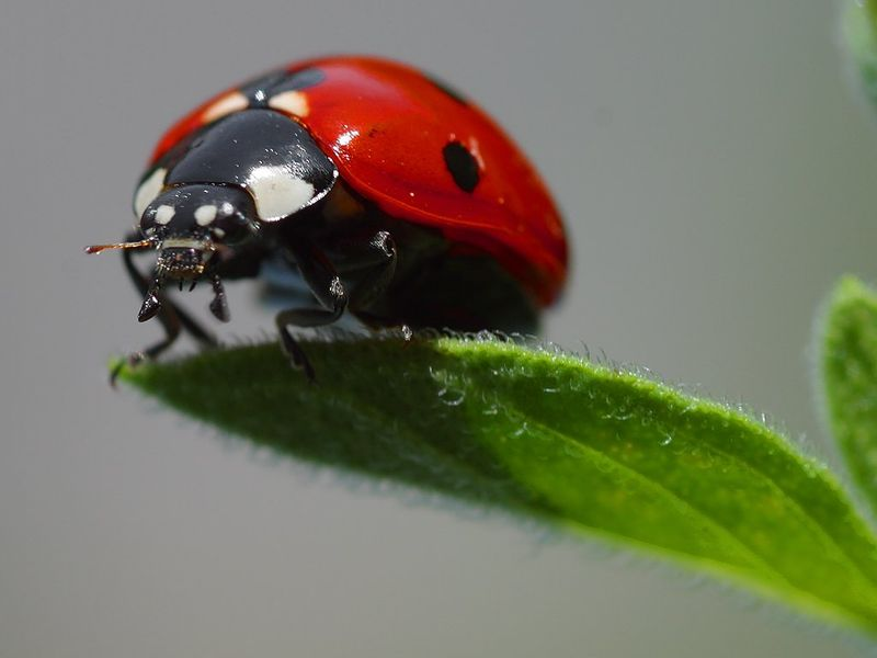 5 Things You Didn't Know About Ladybugs