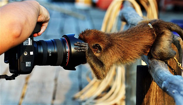 Cheeky Monkeys Steal A Camera
