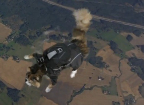 Skydiving Cats????