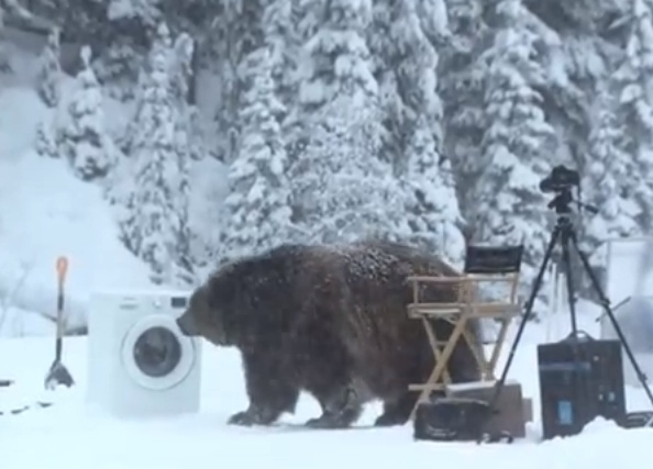 The Suprise Visit By A Bear