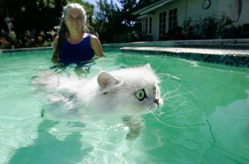 Cats & Water