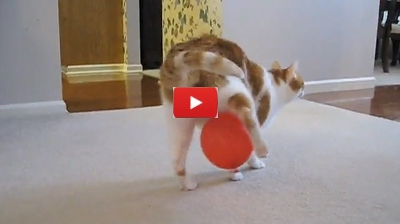Cat Vs Static & Balloon