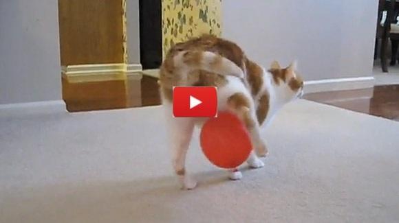 Cat Vs Static & Balloon