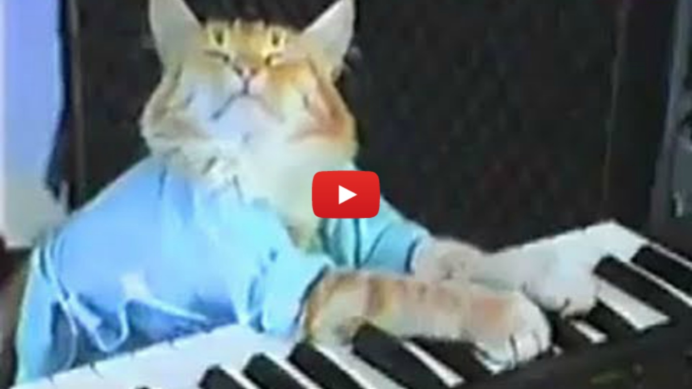 Charlie Schmidt's Keyboard Cat!