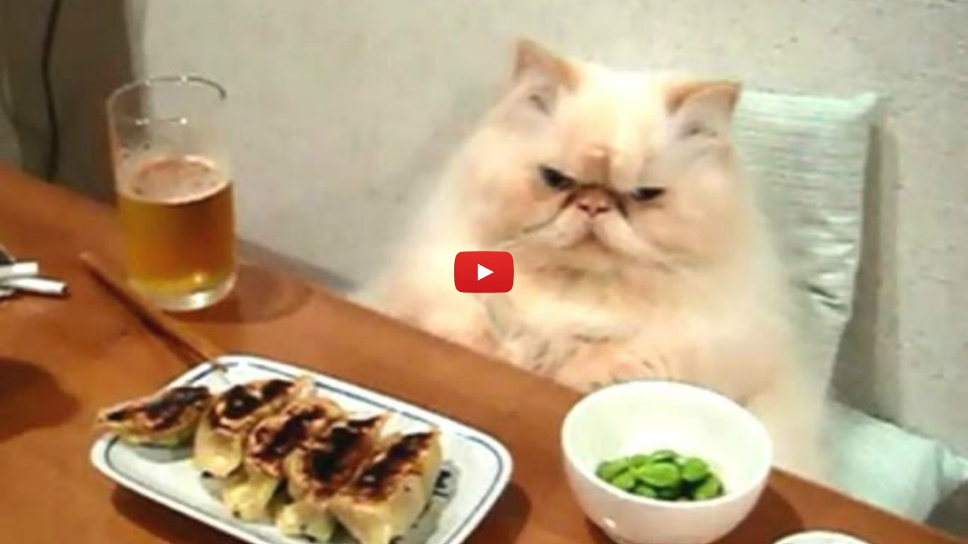 cats human
