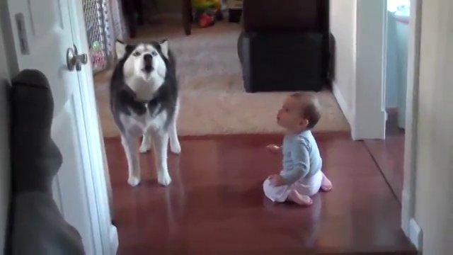 dog imitates