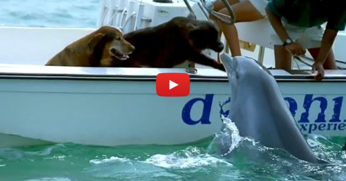 Dolphin Kisses Dog, Jumps For Joy