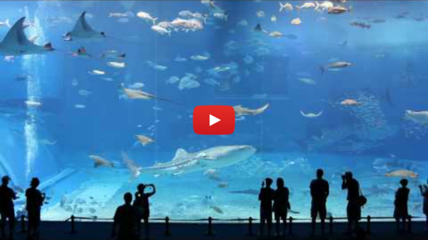 Kuroshio Sea - 2nd Largest Aquarium Tank In The World