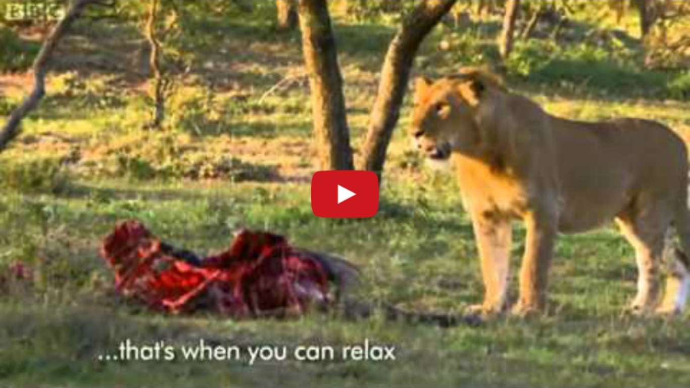 Men Stealing Lions Food
