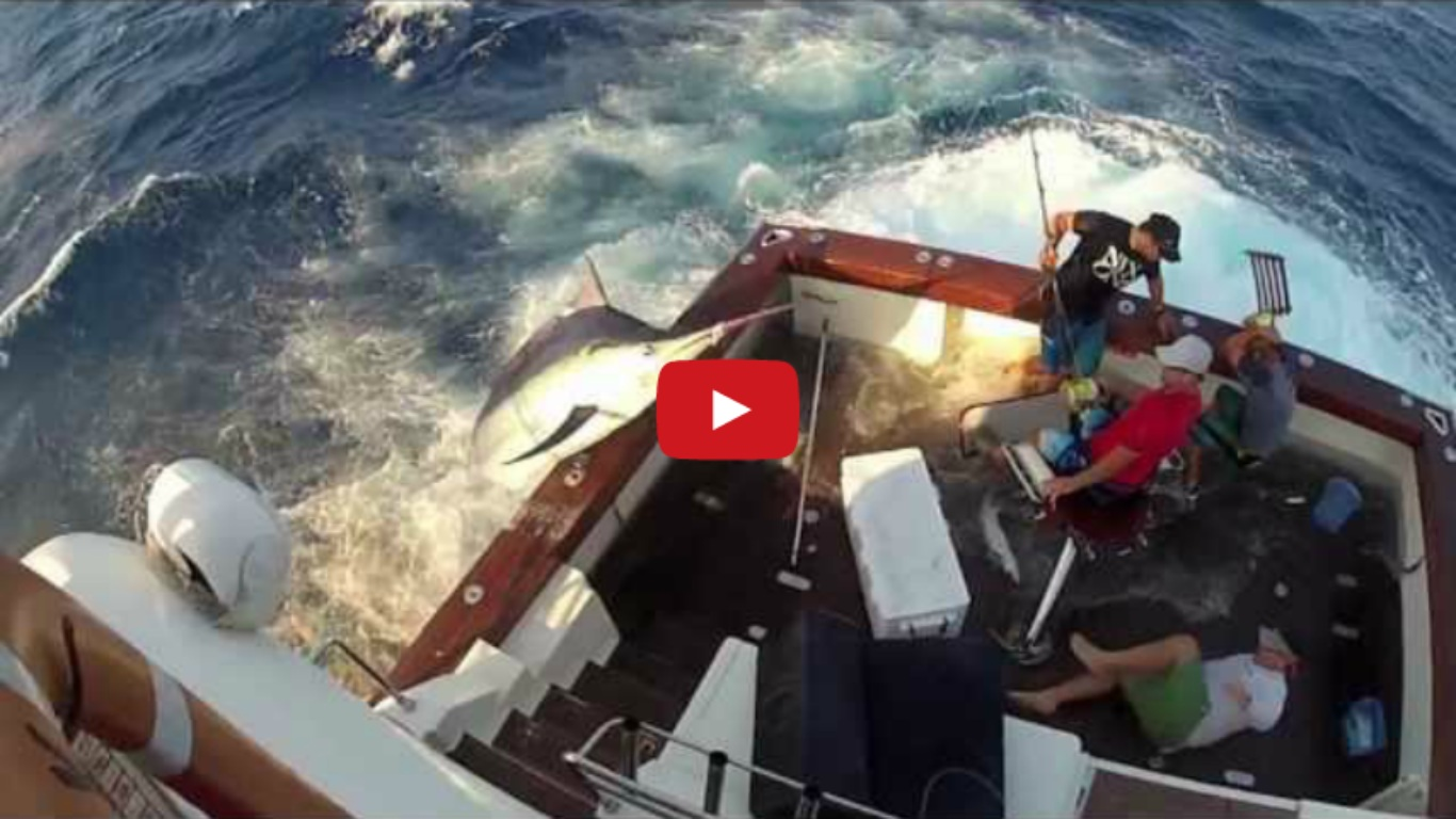 600lb Black Marlin Jumps in Boat and Lands on the Crew
