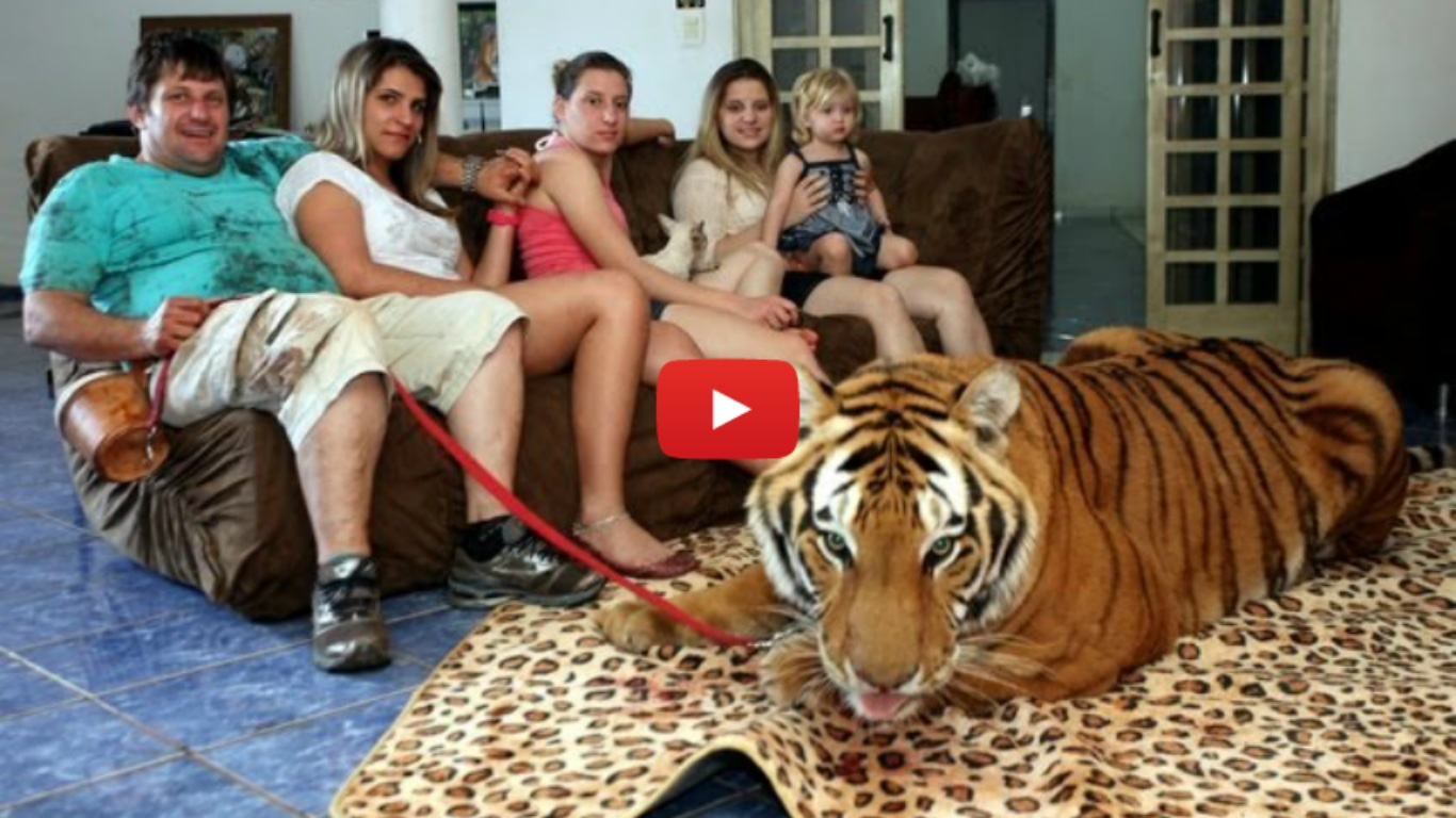 Living With Tigers - Family Share Home With Pet Tigers